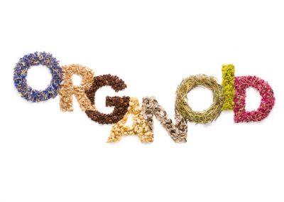 Organoid Logo